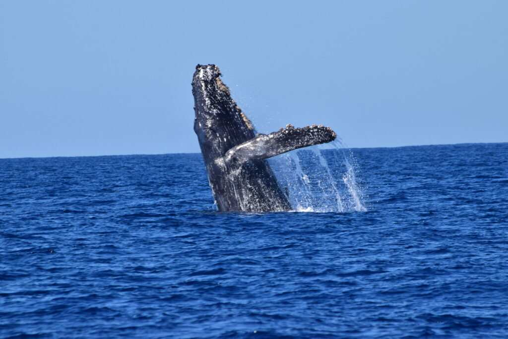 Where to whale watch in Cabo