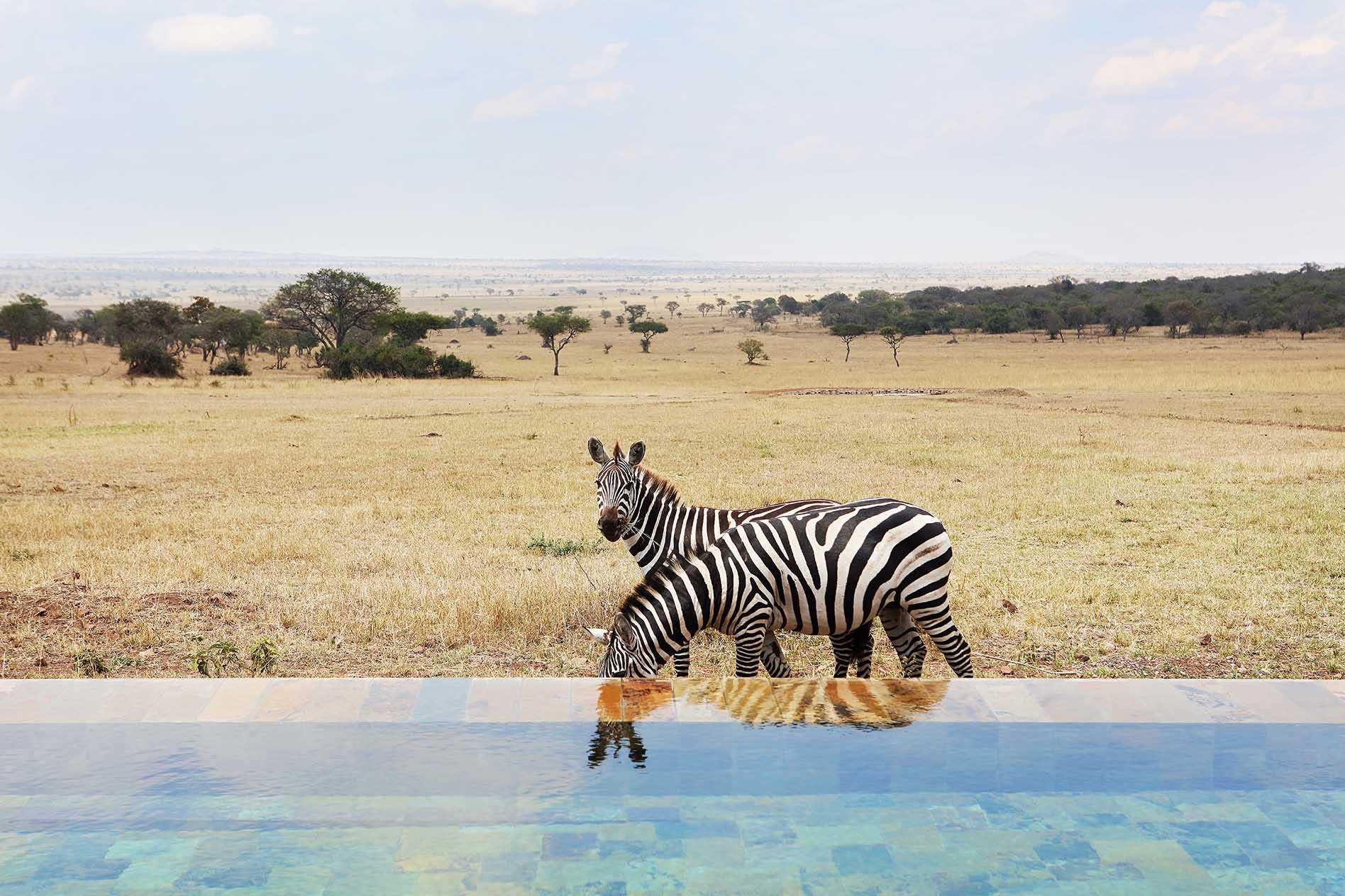 Tanzania African Luxury Safari