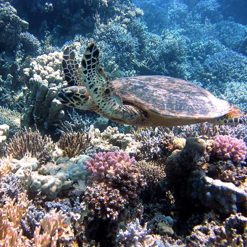 Marine life in the Sea of Cortez