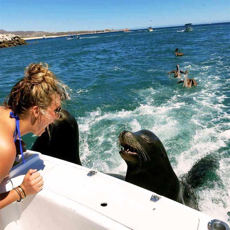 Marine life tours in sea of cortez