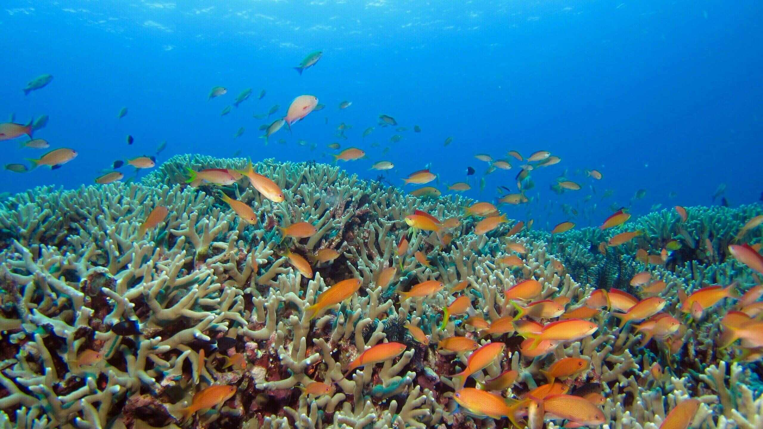 Private snorkeling excursion for groups