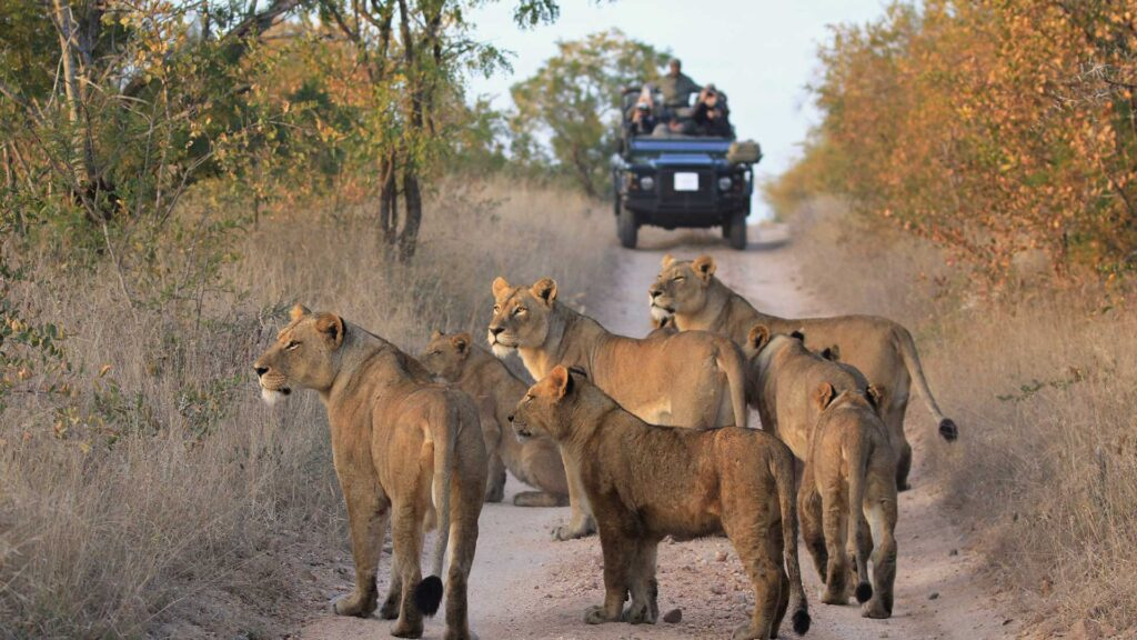 Bucket list South African safari