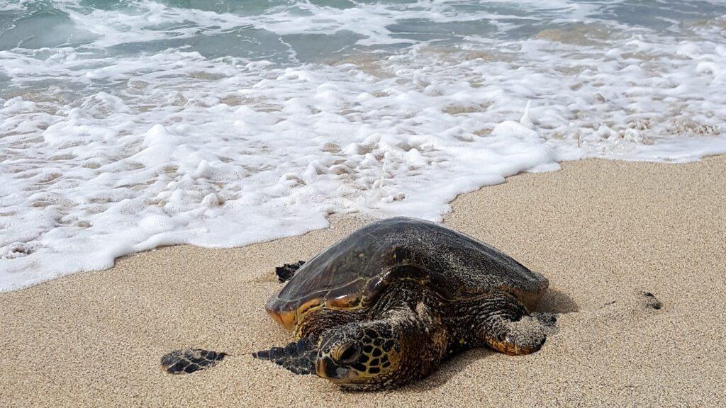 Kona, Hawaii beach vacations