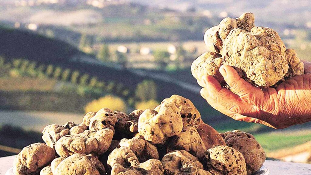 Truffle hunting season in Tuscany