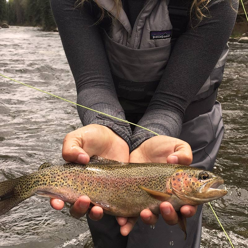 Fly fishing in Vail, Colorado