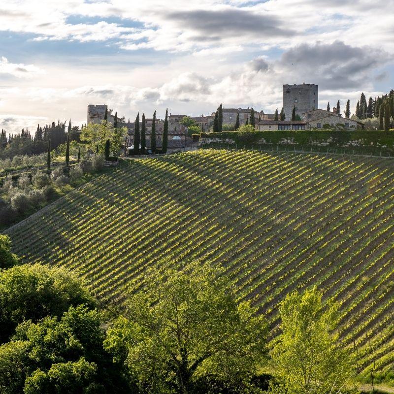 Rolling vineyards of Chianti Classico